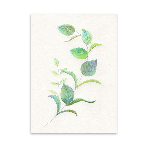 Featured-Botanical-1-Watercolor