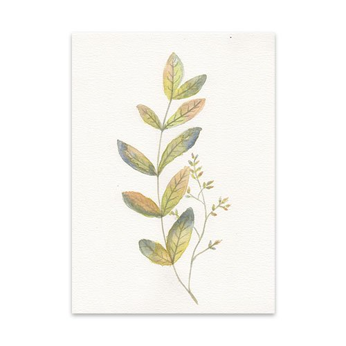 Featured-Botanical-2-Watercolor