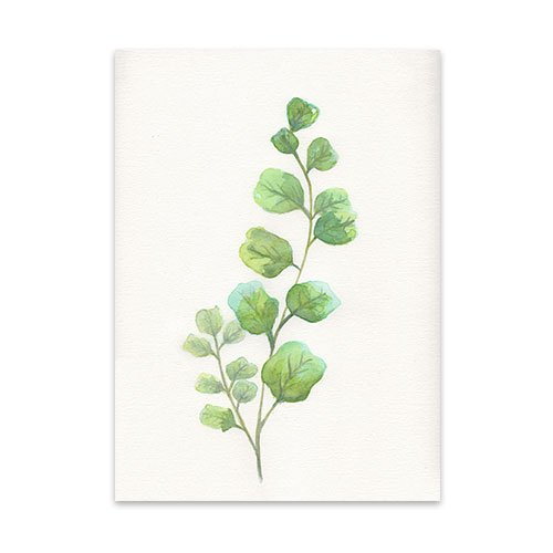 Featured-Botanical-3-Watercolor