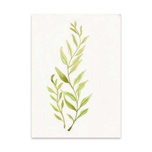 Featured-Botanical-4-Watercolor